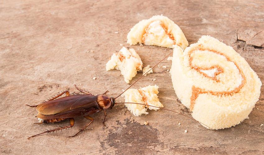 Urlaub Ohne Kakerlaken Mückenstiche Und Sonnenbrand So Gehts